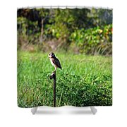 Wide Eyed Owl Shower Curtain