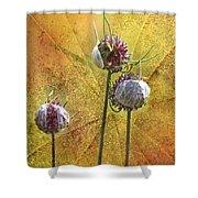 Wild Allium Ala Grunge Shower Curtain