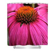 Wild Berry Purple Cone Flower Shower Curtain