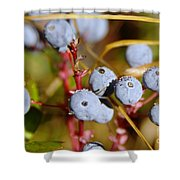 Wild Blue Berries With Water Drops  Shower Curtain