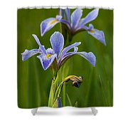 Wild Blue Flag Iris Shower Curtain
