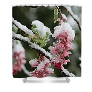 Wild Currant Blossoms Ribes Sanguineum Shower Curtain