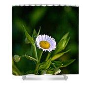 Wild Daisy Shower Curtain