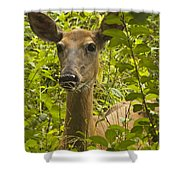 Wild Doe Shower Curtain