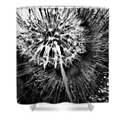 Wild Eyes  Shower Curtain
