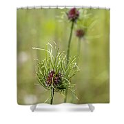 Wild Garlic - Allium Vineale Shower Curtain