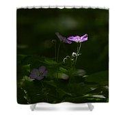 Wild Geranium In Woodland Light Shower Curtain