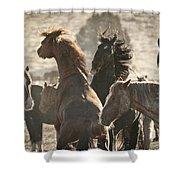 Wild Horse Battle Shower Curtain
