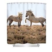 Wild Horse Disagreement  Shower Curtain