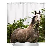 Wild Horse In The Wilderness Shower Curtain