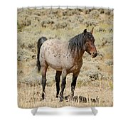 Wild Horses Wyoming - The Mare Shower Curtain