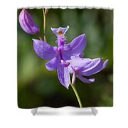 Wild Lavender Orchid Shower Curtain