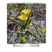 Wild Lettuce - Lactuca Virosa Shower Curtain