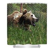 Wild Life Safari Bear Shower Curtain