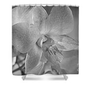 Wild Maui Orchid Shower Curtain
