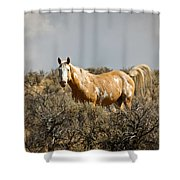 Wild Oregon Horse Shower Curtain