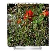 Wild Paint Brush Shower Curtain