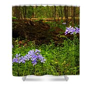 Wild Phlox In The Woodlands Shower Curtain