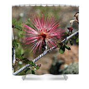 Wild Pink Fairy Duster Shower Curtain