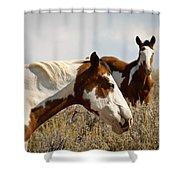 Wild Pintos Shower Curtain