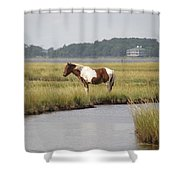 Wild Pony In The Marsh On Assateague Island Md Shower Curtain