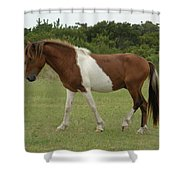 Wild Pony On Assateague Island Maryland Shower Curtain