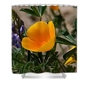 Wild Poppy And Lupine Shower Curtain