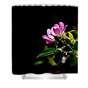 Wild Rose Along Galls Creek Shower Curtain
