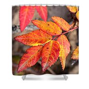 Wild Rose Leaves Shower Curtain