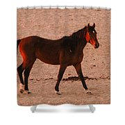 Wild Stallion Shower Curtain