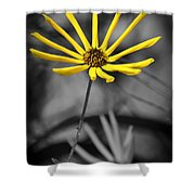 Wild Swamp Daisy Shower Curtain