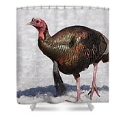 Wild Turkey In The Snow Shower Curtain