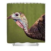 Wild Turkey Portrait Shower Curtain