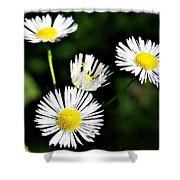Wildflower 4 Shower Curtain
