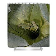 Wildflower Window Shower Curtain by Chris Berry