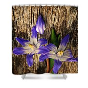 Wildflowers On Wood Shower Curtain