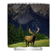 Wildlife In The Mountains Shower Curtain