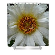 Wiley White Dahlia Shower Curtain