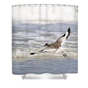 Willet Flying Shower Curtain