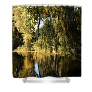 Willow Mirror Shower Curtain by LeeAnn McLaneGoetz McLaneGoetzStudioLLCcom