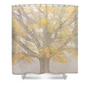 Willow Oak In Fog Shower Curtain by Bill Swindaman