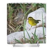 Wilsons Warbler By The Stream Shower Curtain