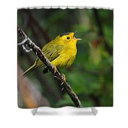 Wilsons Warbler In Song Shower Curtain