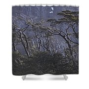 Wind-sculpted Southern Beech Forest Shower Curtain