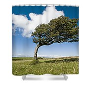Wind-swept Solitary Tree On Open Grassy Shower Curtain