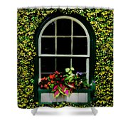 Window On An Ivy Covered Wall Shower Curtain