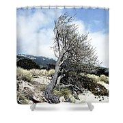 Windswept Tree Shower Curtain