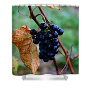 Wine In Time Shower Curtain
