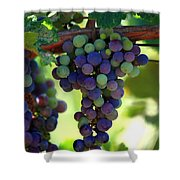 Wine To Be Shower Curtain
