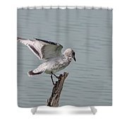Wing Test Shower Curtain